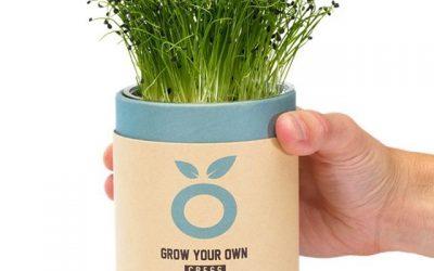 Je eigen kruiden kweken met Grown Cups